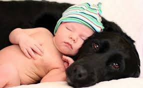 Not my dog and not my baby but you get the point.